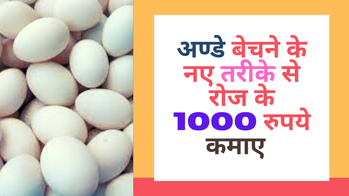 Eggs Selling New Business Idea