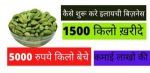 How to Start Cardamom Business in India